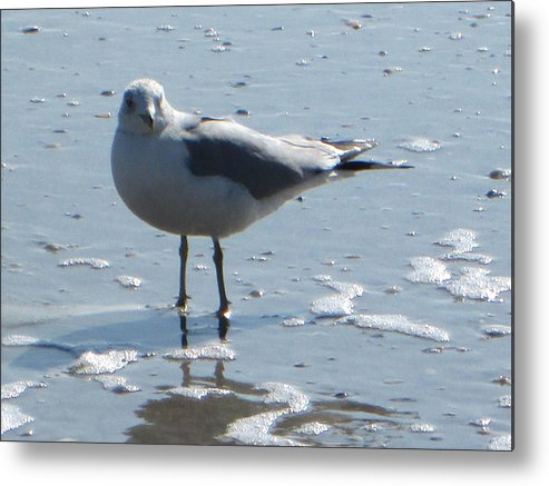 Seagull Metal Print featuring the photograph Seagull by Silvie Kendall