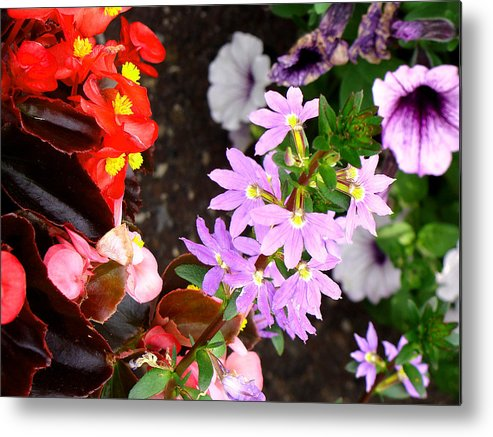 Flowers Metal Print featuring the photograph Secret Garden by Ira Shander