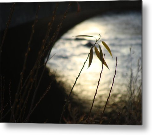 Water Metal Print featuring the photograph Serenity by Sean Soderman