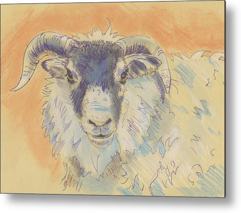 Sheep Metal Print featuring the drawing Sheep With Horns by Mike Jory