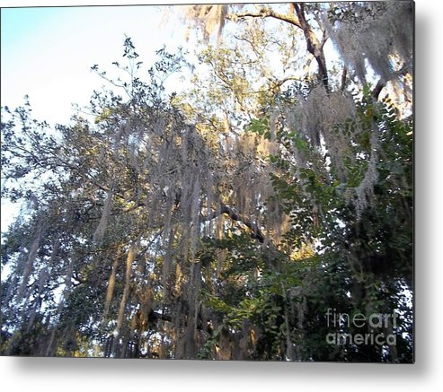 Trees Metal Print featuring the photograph Shrouded by Sheila James