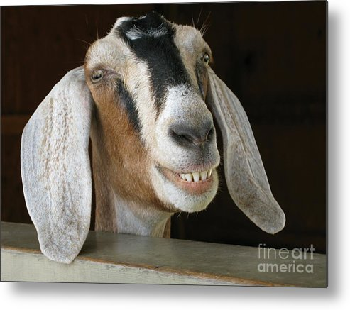 Goat Metal Print featuring the photograph Smile Pretty by Ann Horn