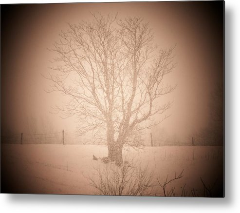 Snow Metal Print featuring the photograph Snow Tree by Michael L Kimble