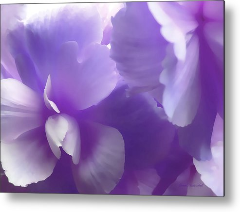 Begonia Metal Print featuring the photograph Softness Of Purple Begonias by Jennie Marie Schell