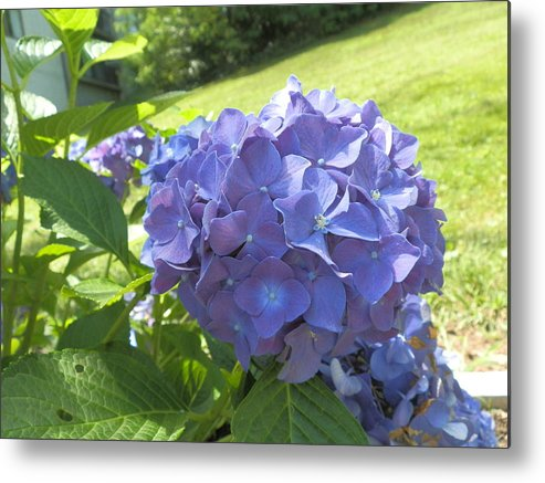 Purple Metal Print featuring the photograph Solo Hydrangea by Valerie Bruno
