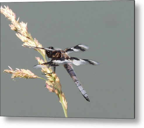 Dragonfly Metal Print featuring the photograph Someday by Lucy Howard