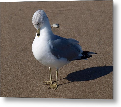 Birds Metal Print featuring the photograph Sound Asleep by Jeffrey Akerson