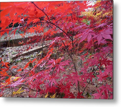 Nature Metal Print featuring the photograph Splendid Fall by Valia Bradshaw