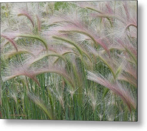 Squirrel Tail Grass Metal Print featuring the photograph Squirrel Tail Grass In The Wind by Deborah Moen