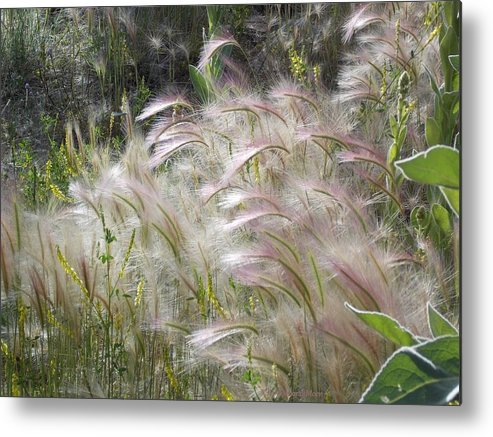 Squirrel Tail Grass Metal Print featuring the photograph Squirrel Tail Grass Panguitch Lake Utah by Deborah Moen