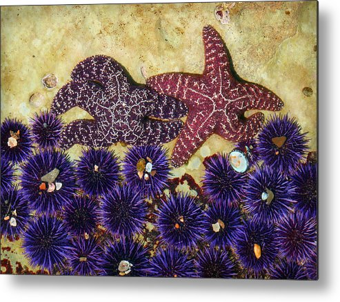 Scenic Metal Print featuring the photograph Starfish Dance by Karey and David Photography