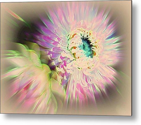 Strawflower Metal Print featuring the photograph Strawflower Awakening by Shirley Sirois