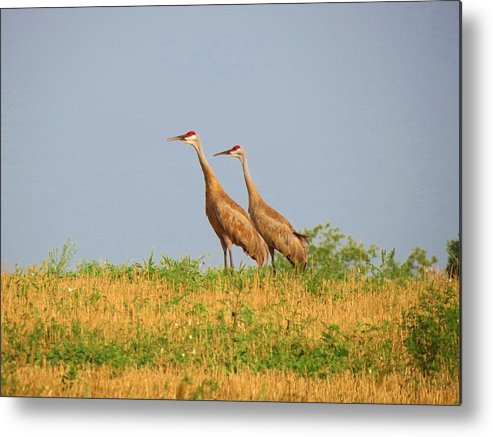Birds Metal Print featuring the photograph Strolling Sandhills by Feva Fotos