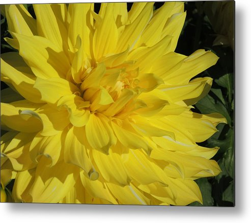 Nature Metal Print featuring the photograph Sunday by Lucy Howard
