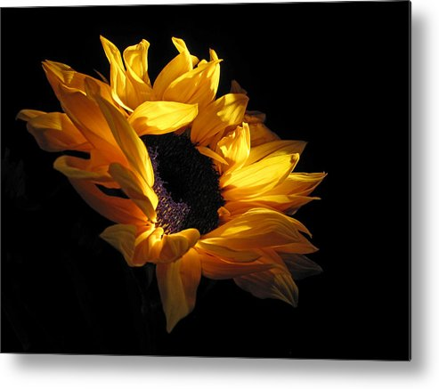 Sunflower Metal Print featuring the photograph Sunflower 1045 by Don Spenner