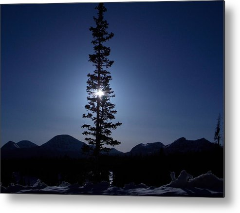 Sunny Winter Pine Metal Print featuring the photograph Sunny Winter Pine by Jennifer Allen