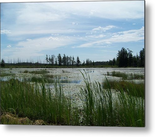Water Metal Print featuring the photograph Swamp by Jennifer King
