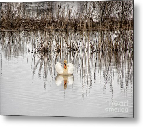 Birds Metal Print featuring the photograph Swan Lake by Jay Ressler