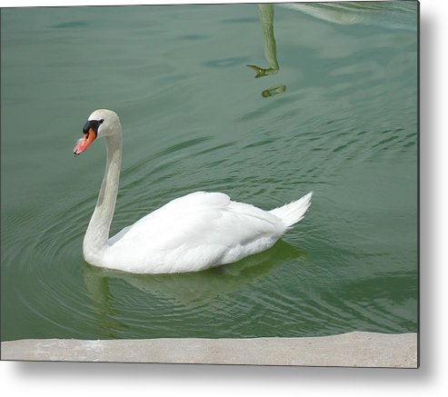 Swan Metal Print featuring the photograph Swan by Nina Kindred