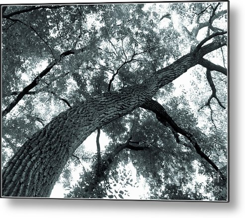 Trees Metal Print featuring the photograph Swirly Tree by Angie Staft