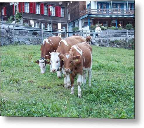 Switzerland Metal Print featuring the photograph Swiss Cows by Nina Kindred