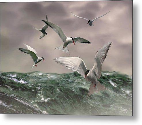 \arctic Terns\ Birds Ocean Seascape Spadecaller Metal Print featuring the painting Terns Feasting At Sea by IM Spadecaller