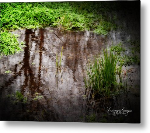Pond Metal Print featuring the photograph The Pond by Monica Havelka