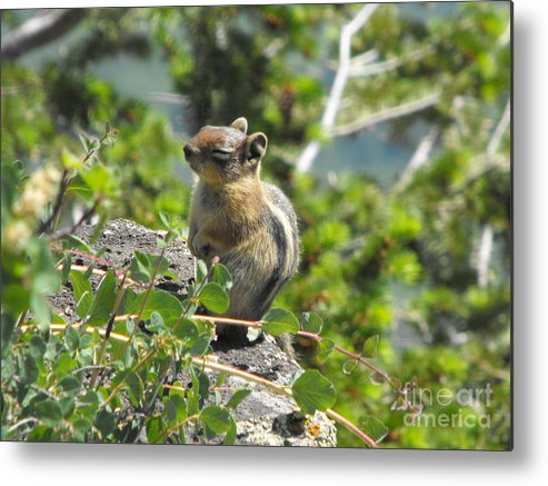 Animals Metal Print featuring the photograph This Is The Life by Brandi Maher