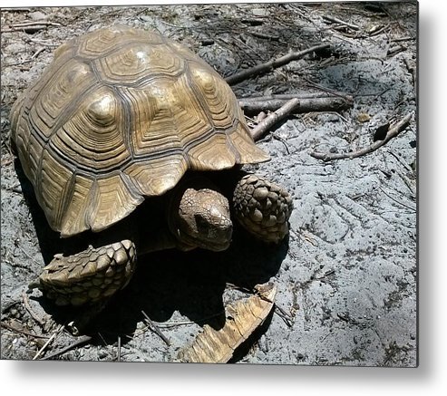 Turtle Metal Print featuring the photograph Time On My Side by Carolina Russell
