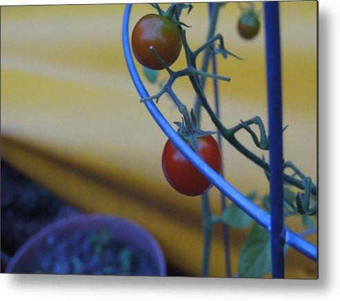 Tomato Metal Print featuring the photograph Tomatoes by Anastasia Konn