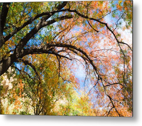 Chinese Pistachios Metal Print featuring the photograph Touch Of Fall by Tamara Becker