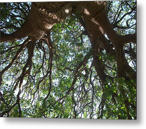 Tree Metal Print featuring the photograph Trea Dream by Abigail Van Meyeren