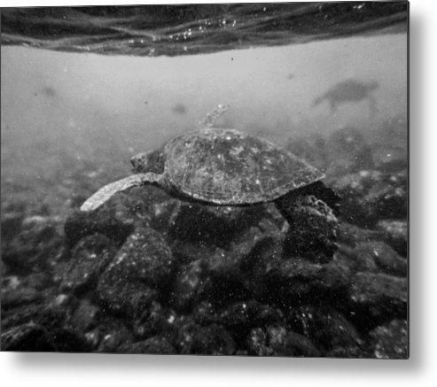 Turtles Metal Print featuring the photograph Turtle Beach by Casey Barnett