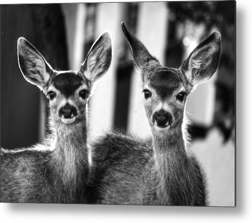 Wildlife Metal Print featuring the photograph Twins by Robin Nations