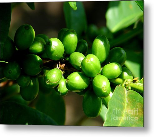 Coffee Metal Print featuring the photograph Unbrewed Coffee by Lew Davis