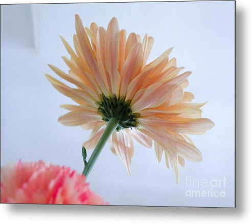Flower Metal Print featuring the photograph Underside Of Daisy by Terry Weaver
