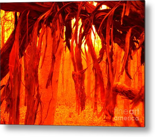 Vine Fringe Metal Print featuring the photograph Vine Fringe by Paddy Shaffer