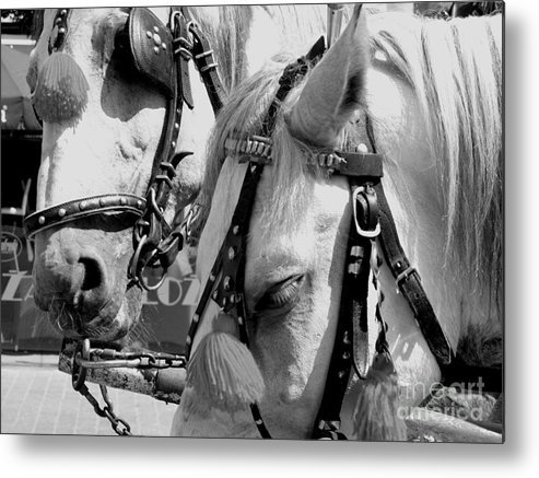 Horses Metal Print featuring the photograph Waiting by Monika A Leon