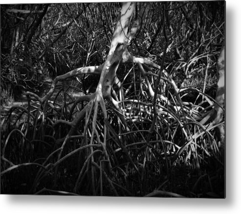 Black Metal Print featuring the photograph Walking Tree Number 2 by Phil Penne
