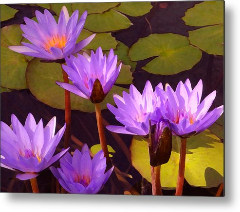 Water Lilies Metal Print featuring the painting Water Lily Pond by Amy Vangsgard