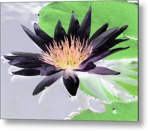 Water Lily Metal Print featuring the photograph Water Lily - Purple Power - Photopower 1377 by Pamela Critchlow