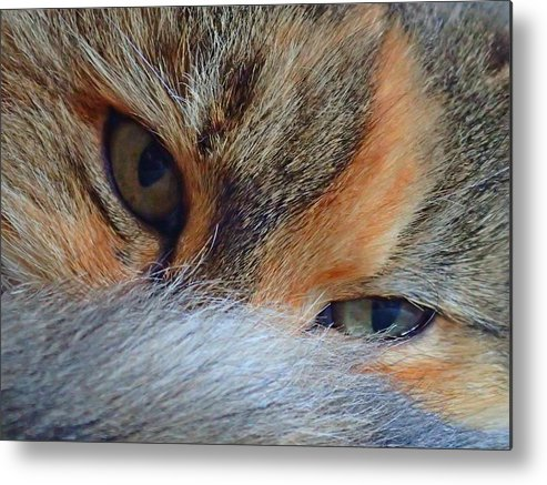 Cat Metal Print featuring the photograph Who Disturbs My Cat Nap? by Tracy Chmielecki