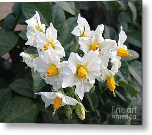 Blossoms Metal Print featuring the photograph Garden Blossoms White And Yellow Garden Blossoms by Conni Schaftenaar