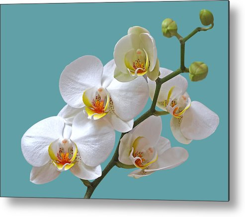 Soft White Orchid Metal Print featuring the photograph White Orchids On Ocean Blue by Gill Billington