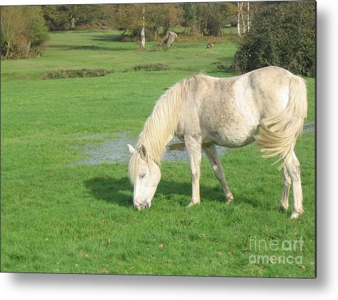 Pony Metal Print featuring the photograph White Pony On The Moors by DejaVu Designs