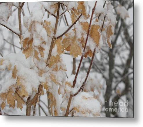 Nature Metal Print featuring the photograph Winter Leaves by Kimberly Cohne