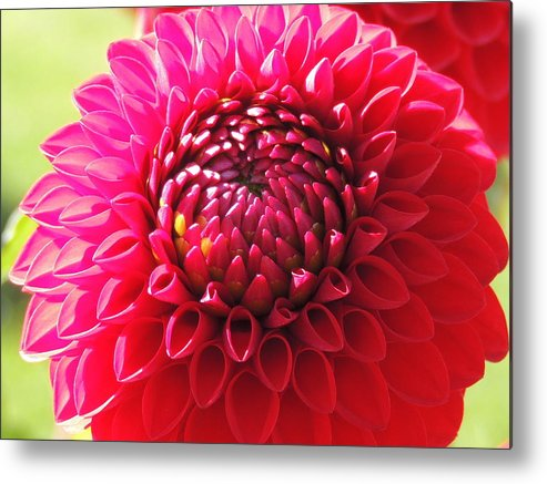 Nature Metal Print featuring the photograph With You by Lucy Howard