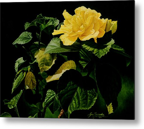 Floral Metal Print featuring the painting Yellow Hibiscus by Gary Hernandez