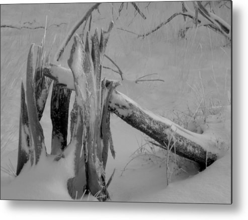 Winter Metal Print featuring the photograph Bw Snowy Stump by Amara Roberts