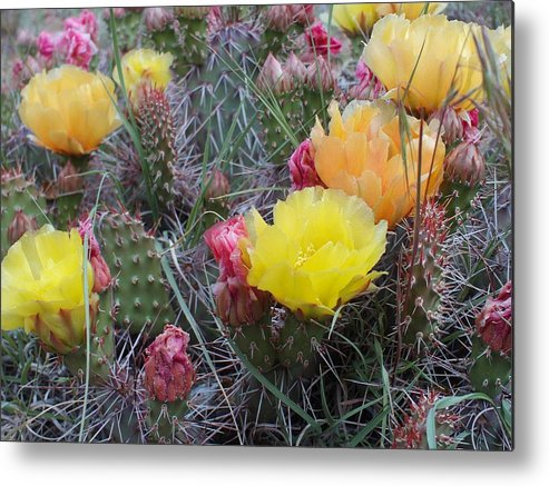 Yellow Metal Print featuring the photograph Cactus by Amara Roberts